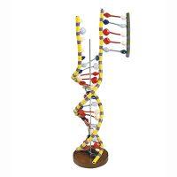 Клітина Генетика